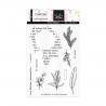 Tampons transparents - EN ATTENDANT L'HIVER  'Mon herbier'